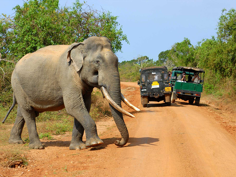 Picture of Yala national park